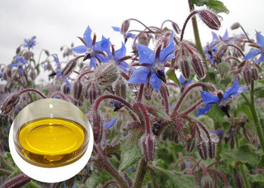 China Borage Seed Organic Plant Oils Omega 6 GLA Anti Oxidation For Eczema supplier