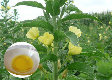 China PMS Organic Plant Oils Dietary Supplement Evening Primrose Oil for Capsules supplier