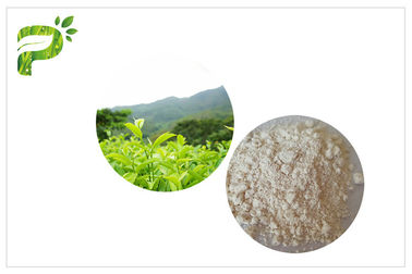 China Anti Oxidation EGCG Green Tea Extract , Pharmaceutical Grade Natural Green Tea Extract supplier
