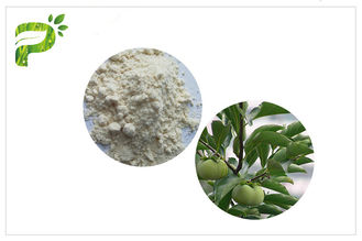 Natural Plant Ursolic Acid Extract , CAS 77 52 1 Persimmon Leaf Powder High Purity