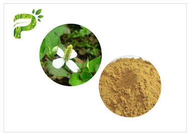 Traditional Plant Extract Powder Inflammation Houttuynia Cordata Thunb Extract Powder