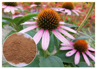 China Chicory Acid Antifungal Plant Extracts Echinacea Pururea Powder From Whole Herb factory