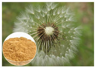Brown powder Natural Anti Inflammatory Supplements Extracted from Dandelion Root