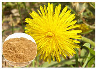 China Anti Cancer Dandelion Root Powder Natural Extraction Improving Liver Function factory