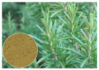 China Ursolic Acid Rosemary Herbal Plant Extract Anti Oxidation For Cosmetic CAS 77 52 1 factory