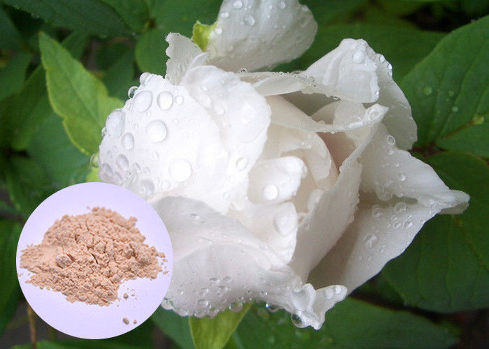 Peony Root Plant Extract Powder Paeonia Lactiflora For Skin Whitening