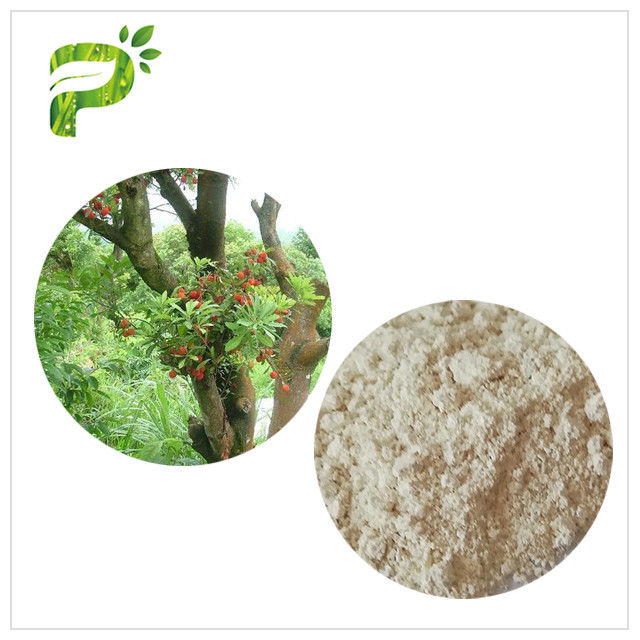 Water Solvent Bayberry Bark Extract Powder , Myricetin Anti Inflammatory Supplements