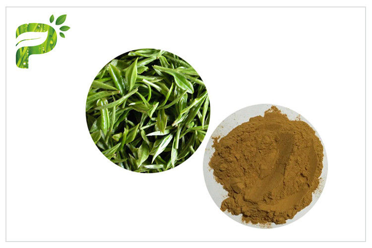 Green Tea Polyphenols Plant Extract Powder 95% For Dietary Supplement Weight Loss