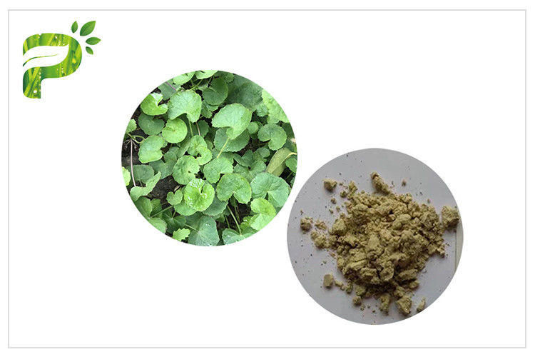 Powder Natural Cosmetic Ingredients Acne Gotu Kola Leaf Extract
