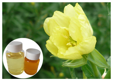 China Breast GLA Organic Evening Primrose Oil From Seed Food Grade Ease Pain distributor