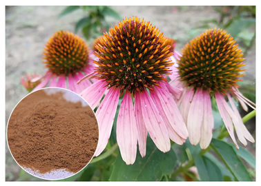 China Echinacea pururea Antifungal Plant Extracts Polyphenol Powder Form Improving Immune System distributor