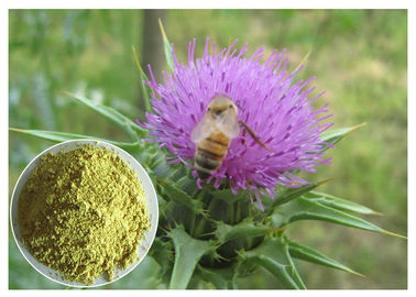 China Silymarin Herbal Plant Extract Milk Thistle Powder From Seed Light Yellow Anti - Cancer distributor