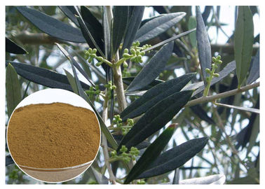 China Hydroxytyrosol Olive Leaf Extract For High Blood Pressure CAS 10597 60 1 distributor