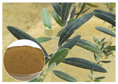 China 80 Mesh Natural Olive Leaf Extract Powder Food Grade Improving Immune System distributor
