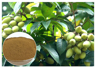 China Oleuropein Natural Olive Leaf Extract Natural Ingredient With HPLC Test distributor