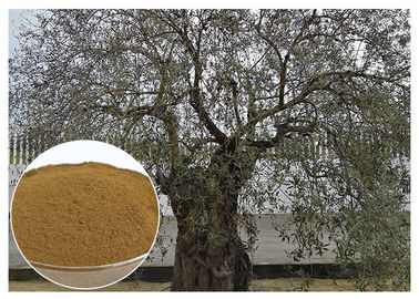 China Oleuropein Olive Leaf Extract Supplement , Olive Leaf Extract Powder Prevent Heart Diseases distributor