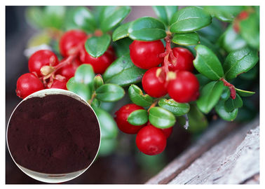 China Dark Red Powder Antifungal Plant Extracts PACs From Cranberry Anti Radiation distributor