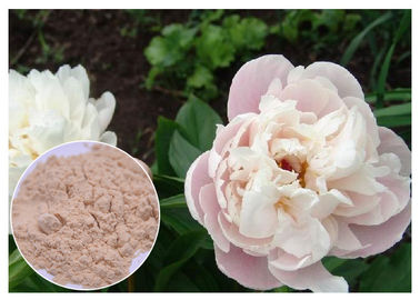 China Peony Root Powder Natural Anti Inflammatory Supplements Water Solvent CAS 23180 57 6 distributor
