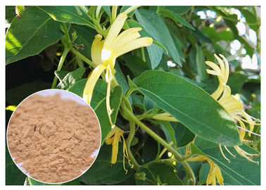 China Anti Inflammatory Honeysuckle Flower Extract , 5% Chlorogenic Acid Lonicera Japonica Extract factory