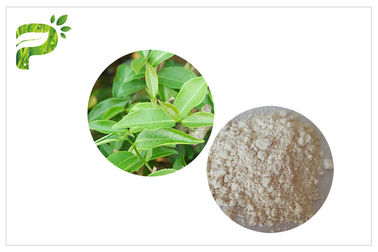 China CAS 989 51 5 EGCG Green Tea Extract Cosmetic Grades Epigallocatechin Gallate Ingredient distributor
