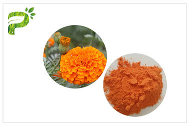 China Retina Protection Marigold Flower Extract , Lutein 5% Powder Marigold Extract For Eyes distributor