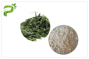 Natural Anti - Oxidation EGCG Green Tea Extract Anti Cancer Powder CAS 989 51 5