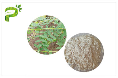 CAS 84687 43 4 Natural Dietary Supplements Astragaloside IV Astragalus Membranaceus Extract