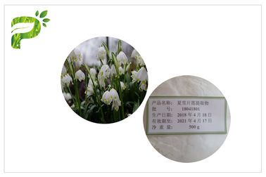 China High Purity Cosmetic Plant Extract Summer Snowflake Leucojum Aestivum For Skin Lightening distributor