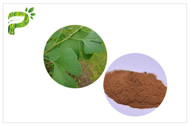 China Prevent Cardiovascular Diseases To Improve Memory Ginkgo Biloba Extract USP EP distributor