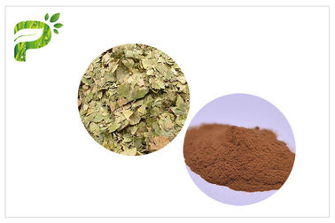 China Prevent Cardiovascular diseases Lower Blood Pressure Ginkgo Biloba Extract USP, EP distributor