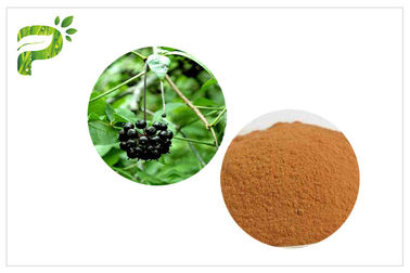 China Siberian Ginseng Powdered Herbal Extracts Acanthopanax Senticosus Eleutheroside B/E distributor