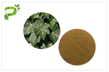 China Ivy Leaf Herbal Plant Extract Hedera Helix Hederacoside Promote Blood Circulation For Dietary Supplement distributor